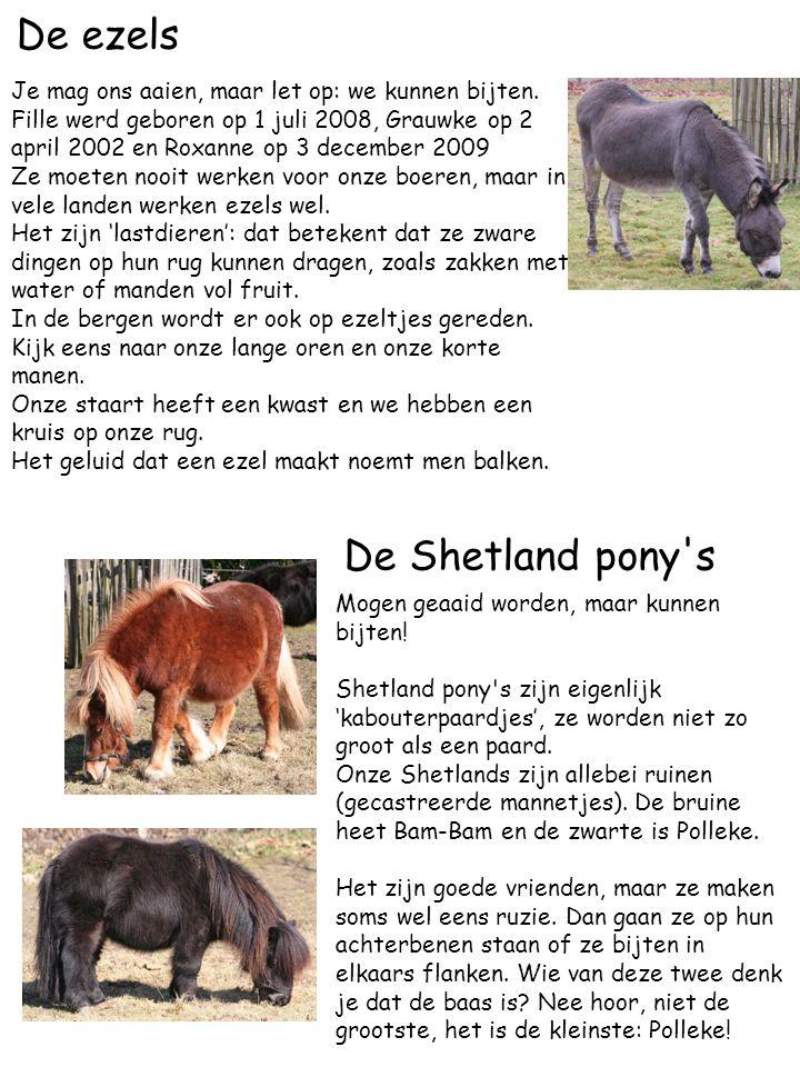 De ezels De Shetland pony s