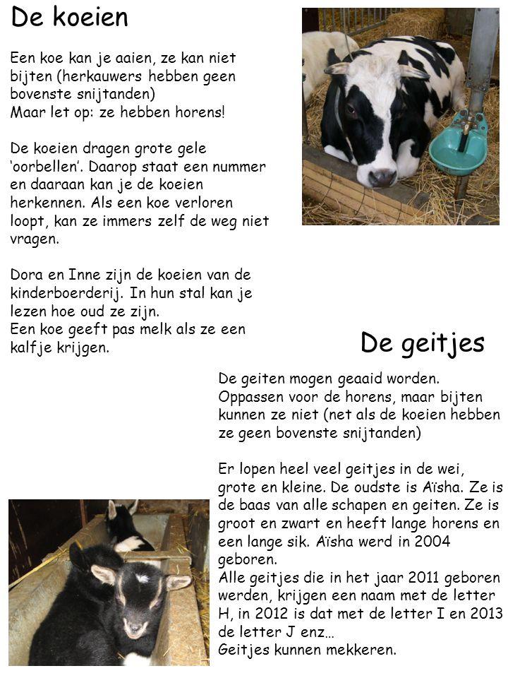 De koeien Een koe kan je aaien, ze kan niet bijten (herkauwers hebben geen bovenste snijtanden) Maar let op: ze hebben horens!