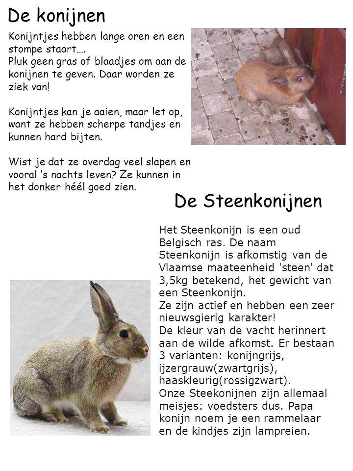 De konijnen De Steenkonijnen