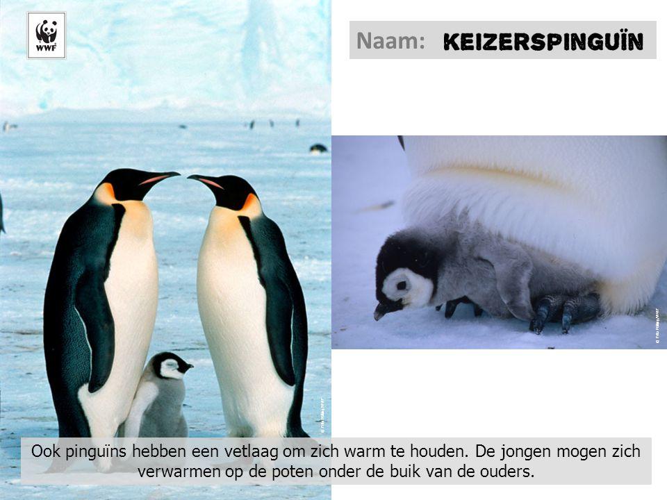 Naam: © Fritz Pölking/WWF. © Fritz Pölking/WWF.