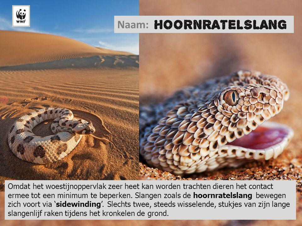 Naam: © Martin Harvey/WWF-Canon.