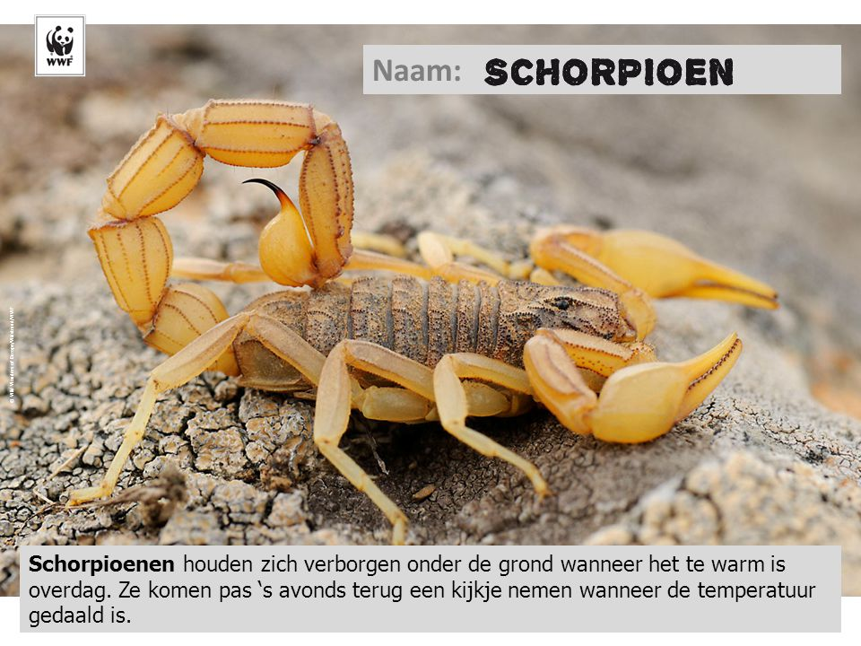 Naam: © Wild Wonders of Europe/Widstrand/WWF.