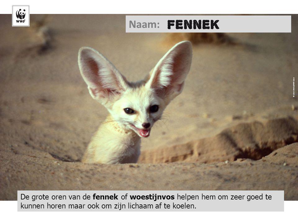 Naam: © John E. Newby/WWF-Canon.
