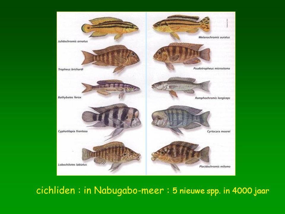 cichliden : in Nabugabo-meer : 5 nieuwe spp. in 4000 jaar