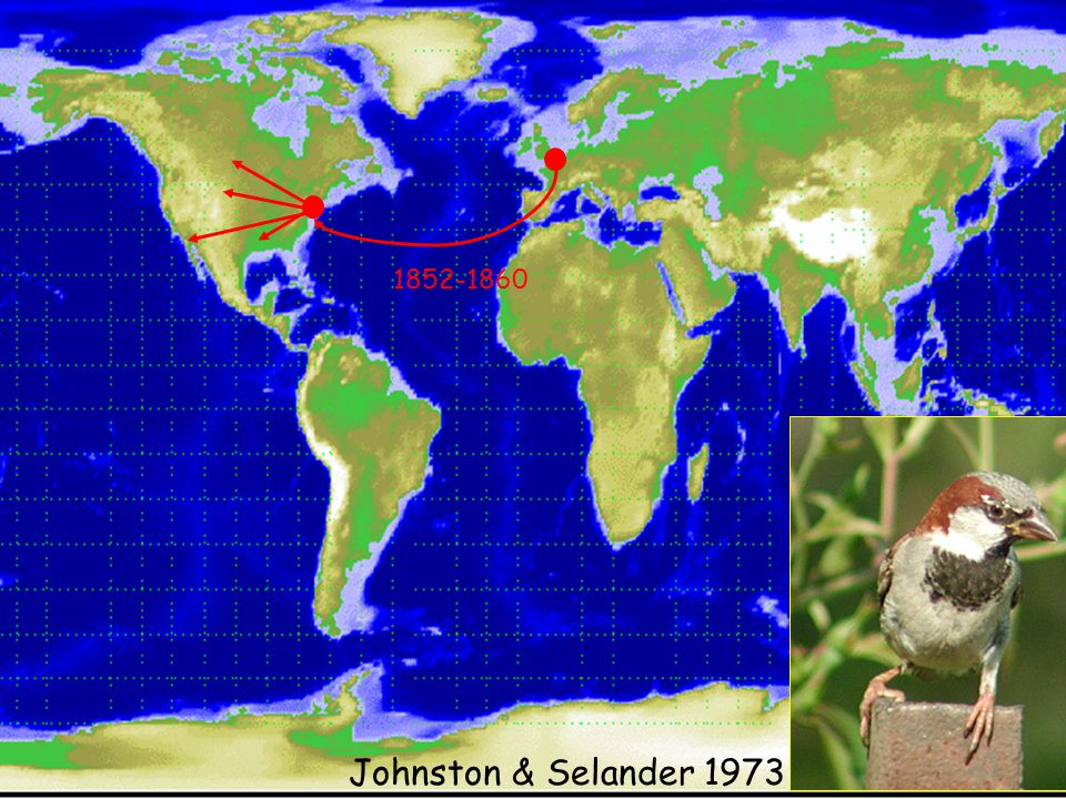 1852-1860 Johnston & Selander 1973