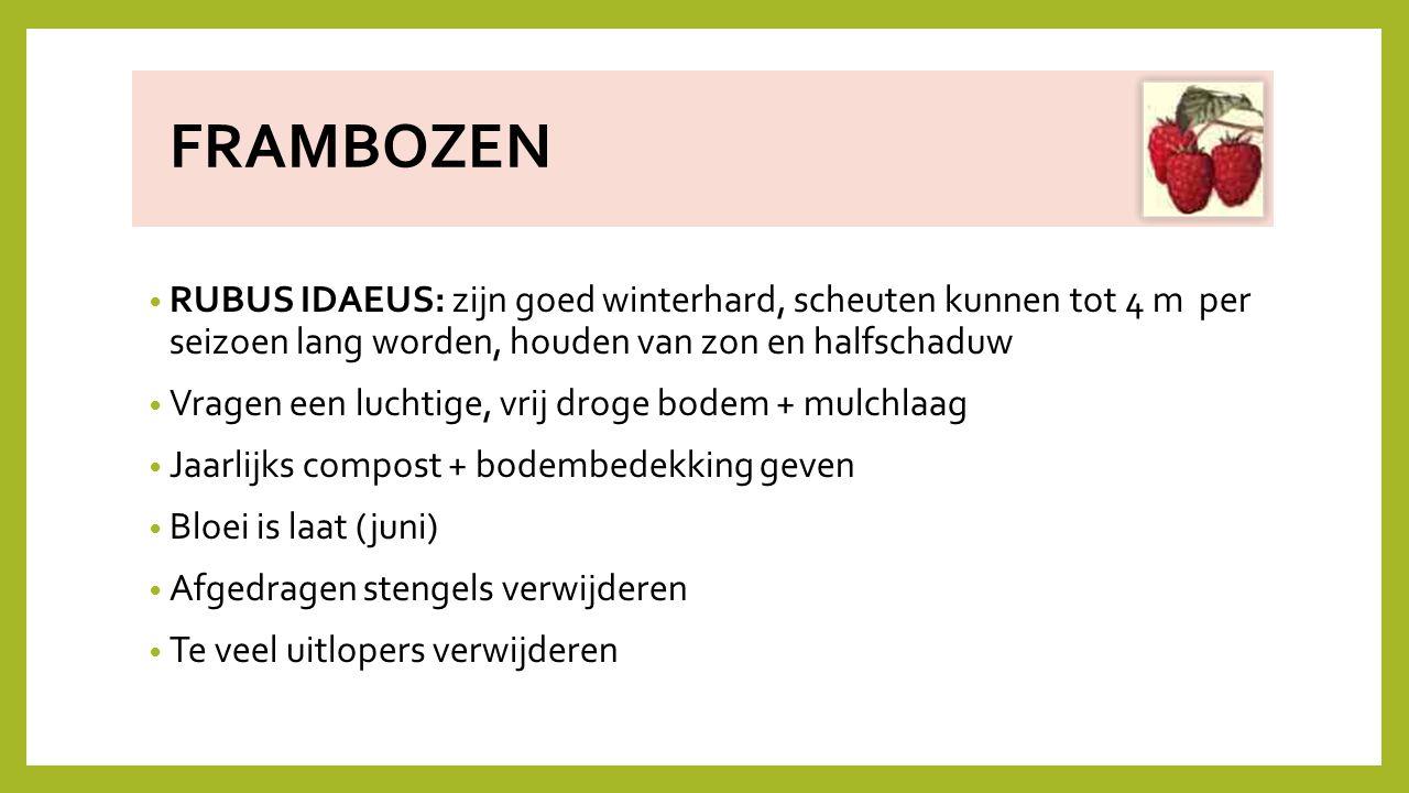 FRAMBOZEN RUBUS IDAEUS: zijn goed winterhard, scheuten kunnen tot 4 m per seizoen lang worden, houden van zon en halfschaduw.