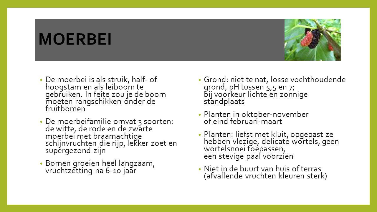 MOERBEI De moerbei is als struik, half- of hoogstam en als leiboom te gebruiken. In feite zou je de boom moeten rangschikken onder de fruitbomen.