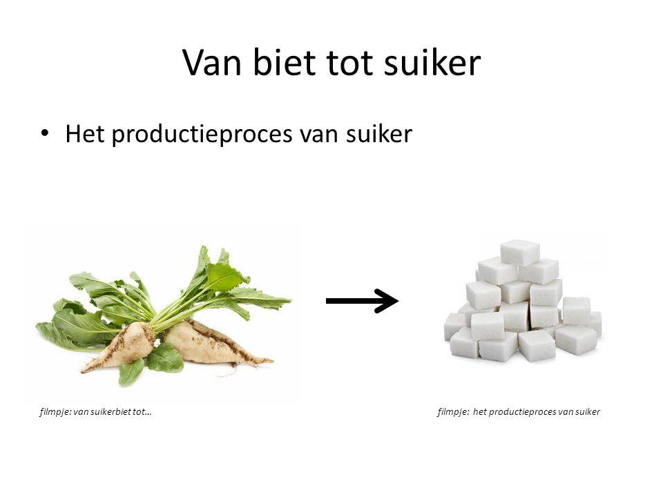 Van biet tot suiker Het productieproces van suiker