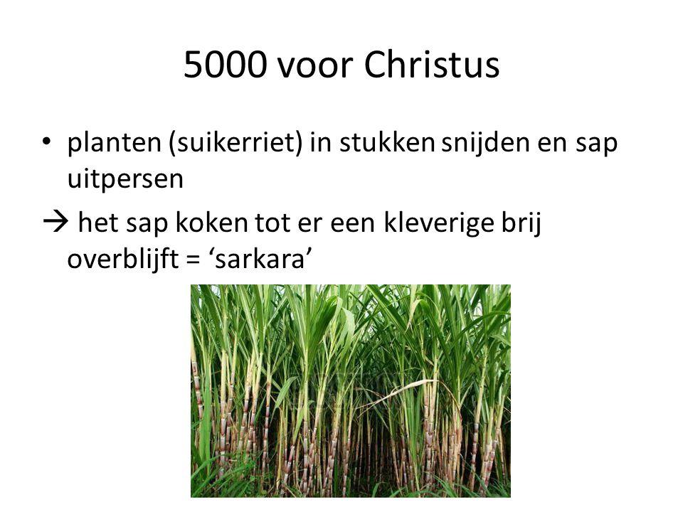 5000 voor Christus planten (suikerriet) in stukken snijden en sap uitpersen.