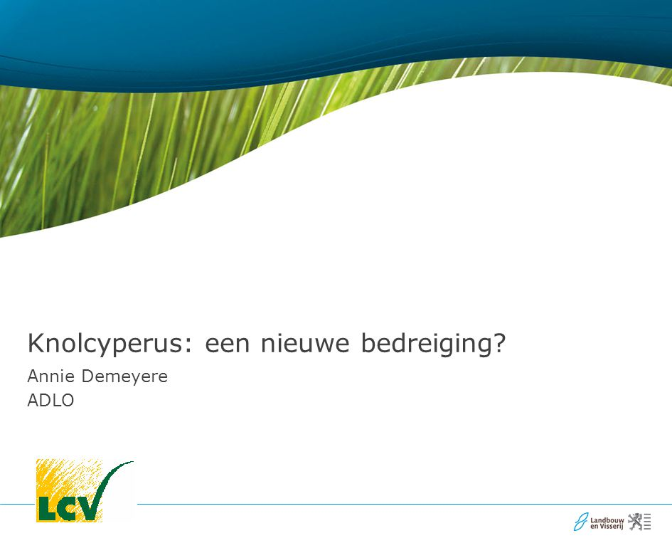Knolcyperus: een nieuwe bedreiging