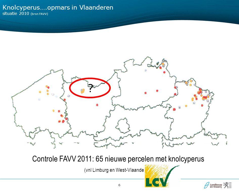 Knolcyperus….opmars in Vlaanderen situatie 2010 (bron FAVV)