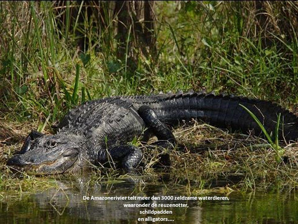 De Amazonerivier telt meer dan 3000 zeldzame waterdieren,