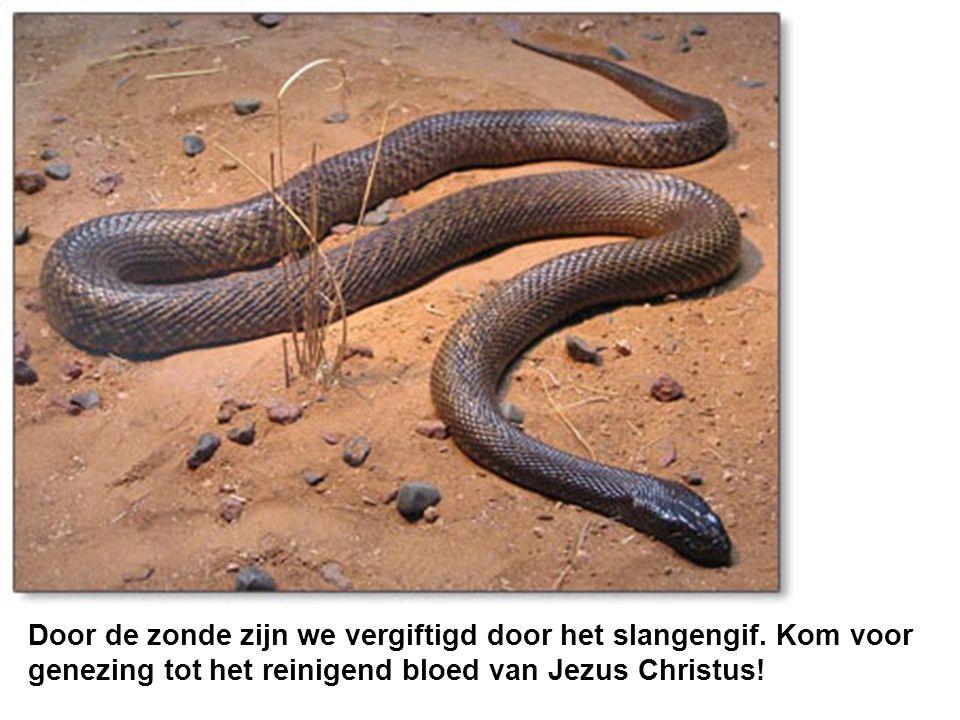 Door de zonde zijn we vergiftigd door het slangengif