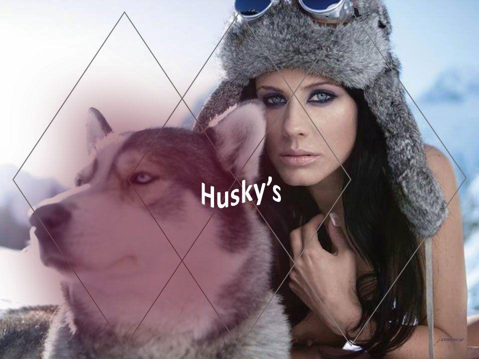 Husky's