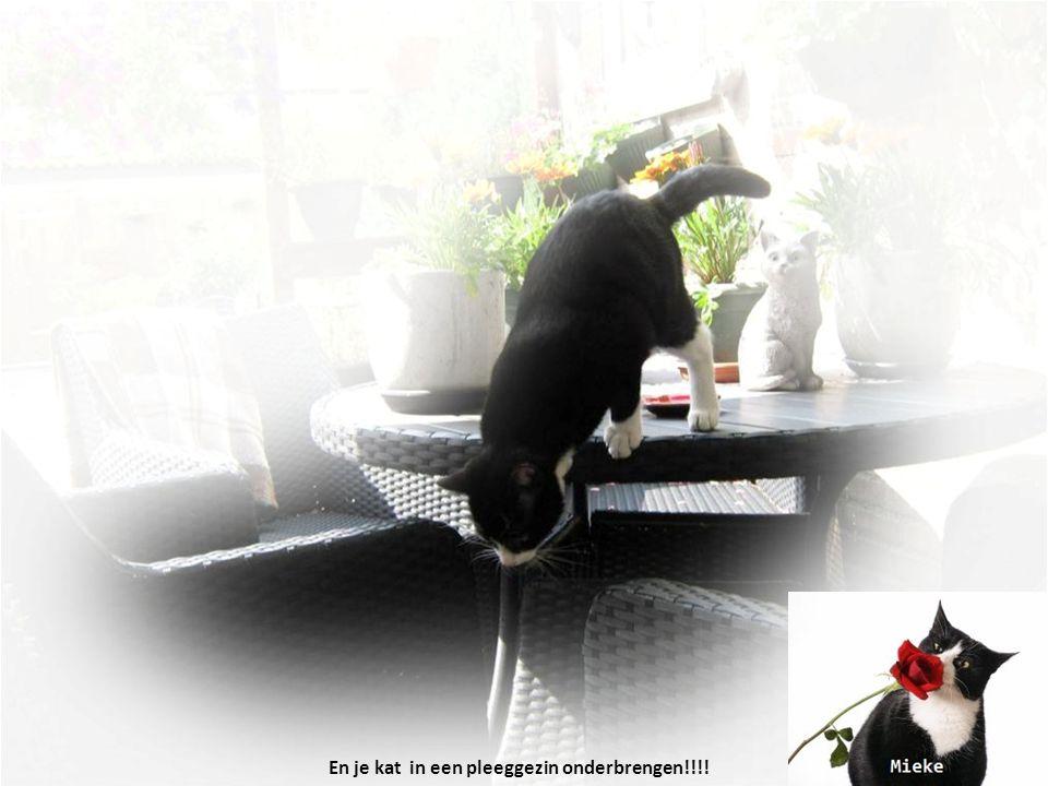 En je kat in een pleeggezin onderbrengen!!!!