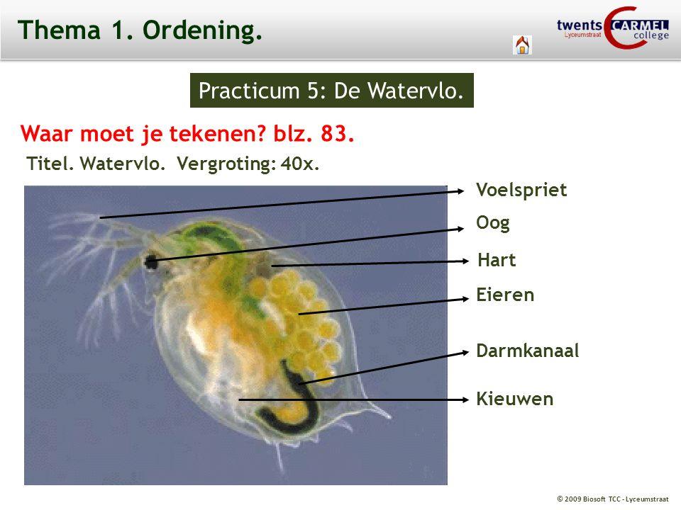Practicum 5: De Watervlo.