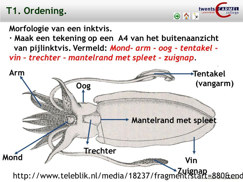 T1. Ordening. Morfologie van een inktvis.
