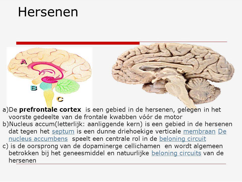 Hersenen De prefrontale cortex is een gebied in de hersenen, gelegen in het voorste gedeelte van de frontale kwabben vóór de motor.