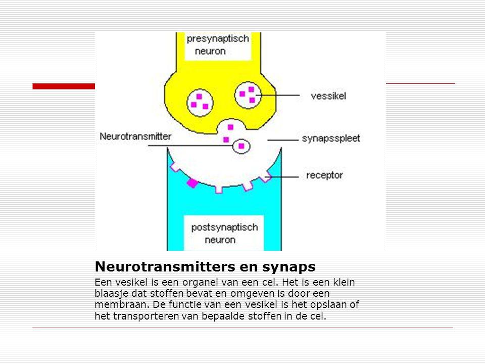 Neurotransmitters en synaps