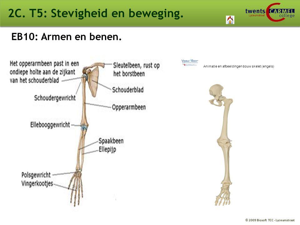 stevigheid en beweging biologie
