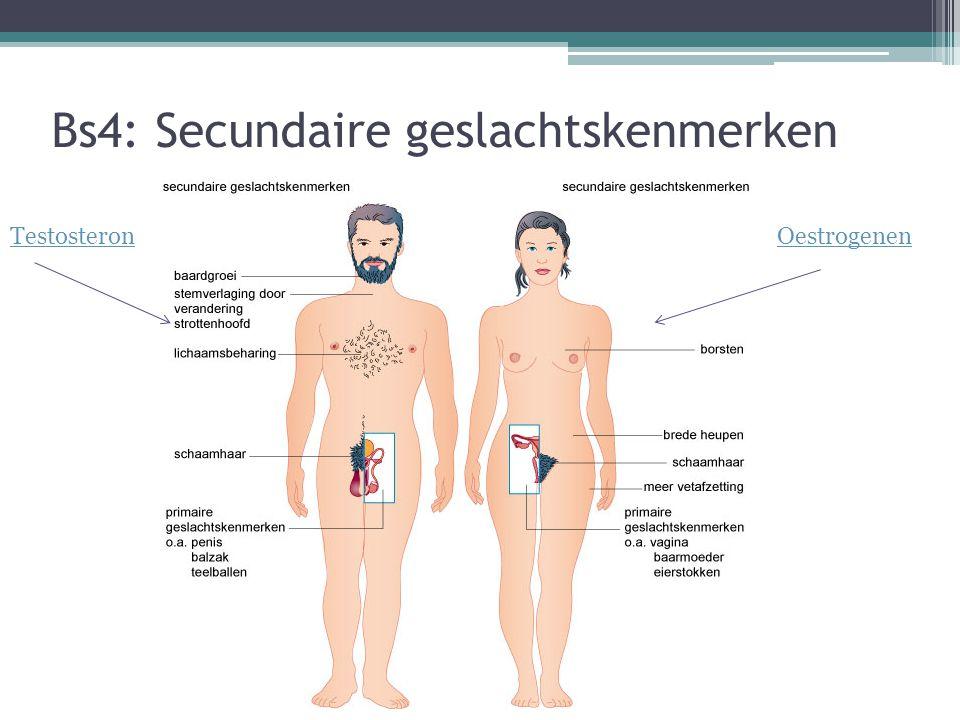Bs4: Secundaire geslachtskenmerken