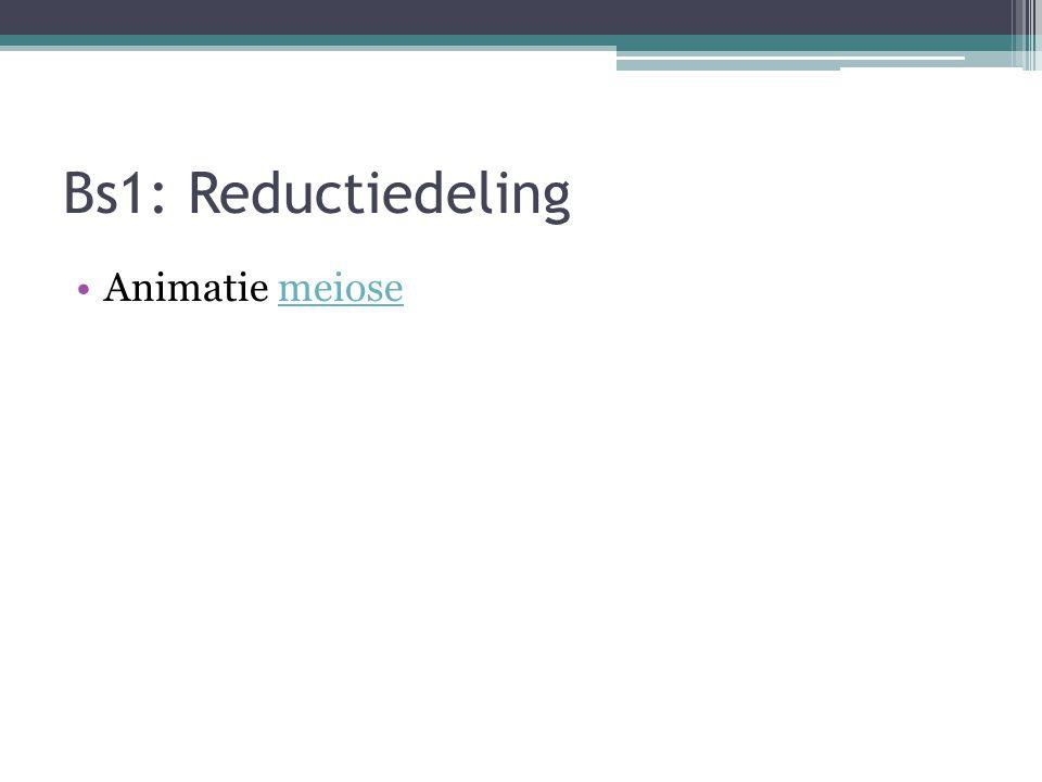 Bs1: Reductiedeling Animatie meiose