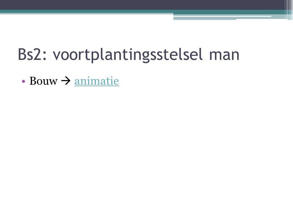 Bs2: voortplantingsstelsel man