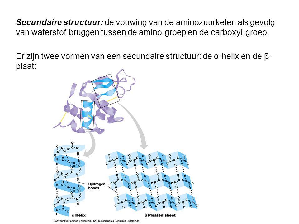 Secundaire structuur: de vouwing van de aminozuurketen als gevolg van waterstof-bruggen tussen de amino-groep en de carboxyl-groep.