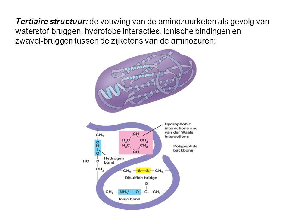 Tertiaire structuur: de vouwing van de aminozuurketen als gevolg van waterstof-bruggen, hydrofobe interacties, ionische bindingen en zwavel-bruggen tussen de zijketens van de aminozuren:
