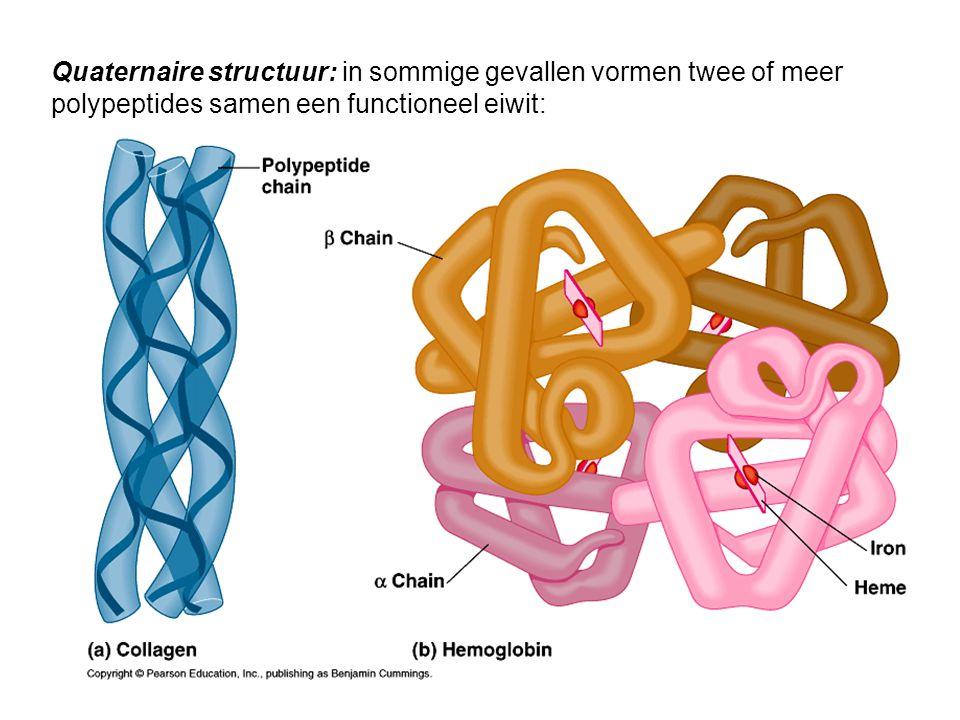 Quaternaire structuur: in sommige gevallen vormen twee of meer polypeptides samen een functioneel eiwit: