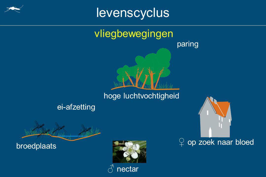 levenscyclus vliegbewegingen ♀ op zoek naar bloed ♂ nectar paring