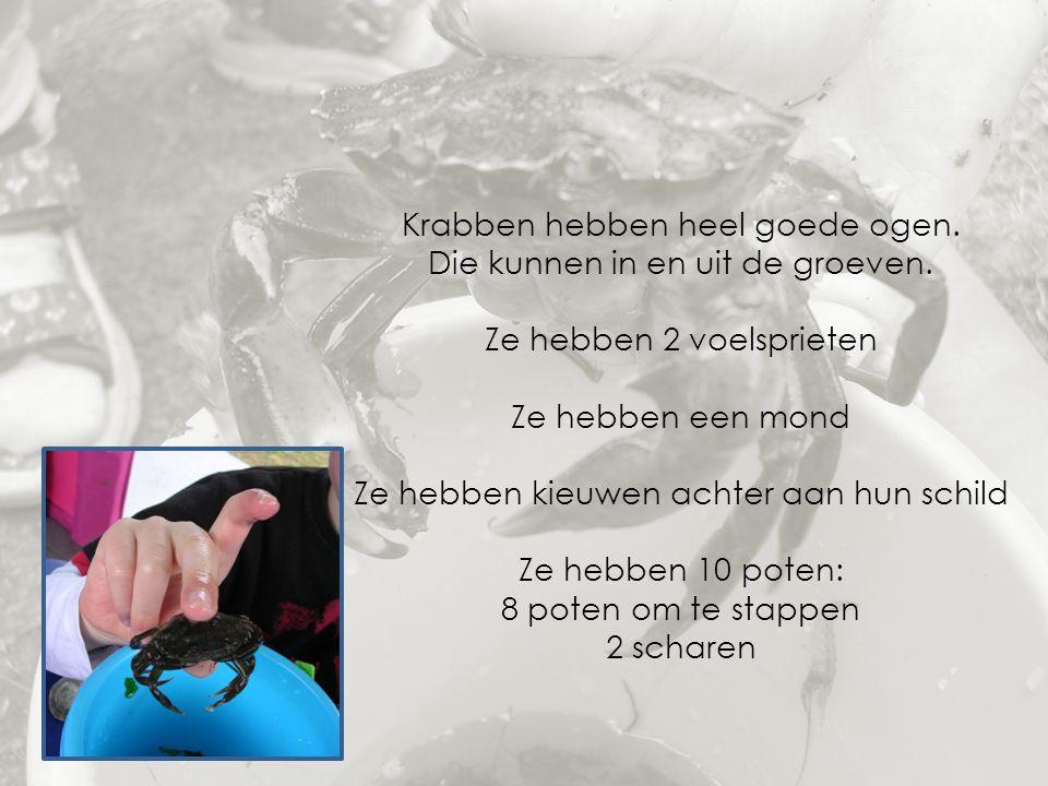 Krabben hebben heel goede ogen. Die kunnen in en uit de groeven