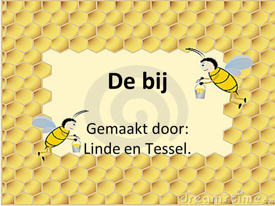 Gemaakt door: Linde en Tessel.