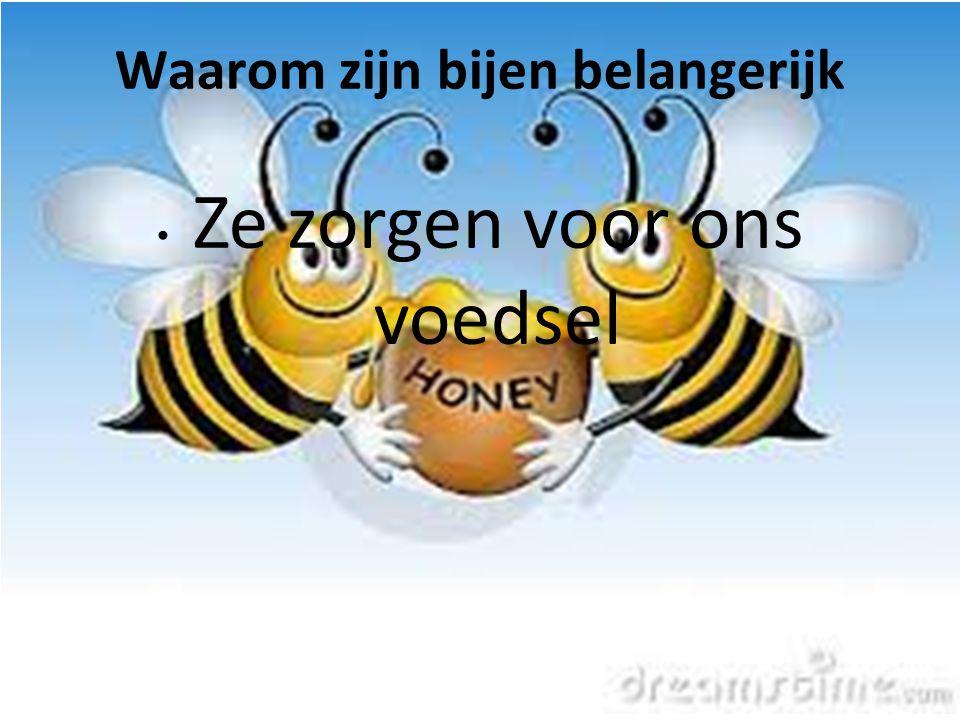 Waarom zijn bijen belangerijk
