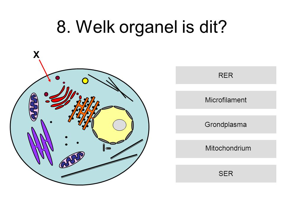 8. Welk organel is dit X RER Microfilament Grondplasma Mitochondrium