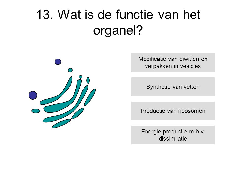 13. Wat is de functie van het organel