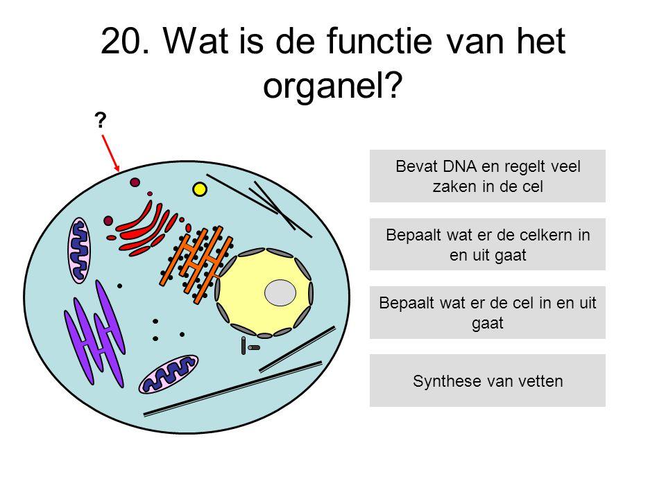 20. Wat is de functie van het organel