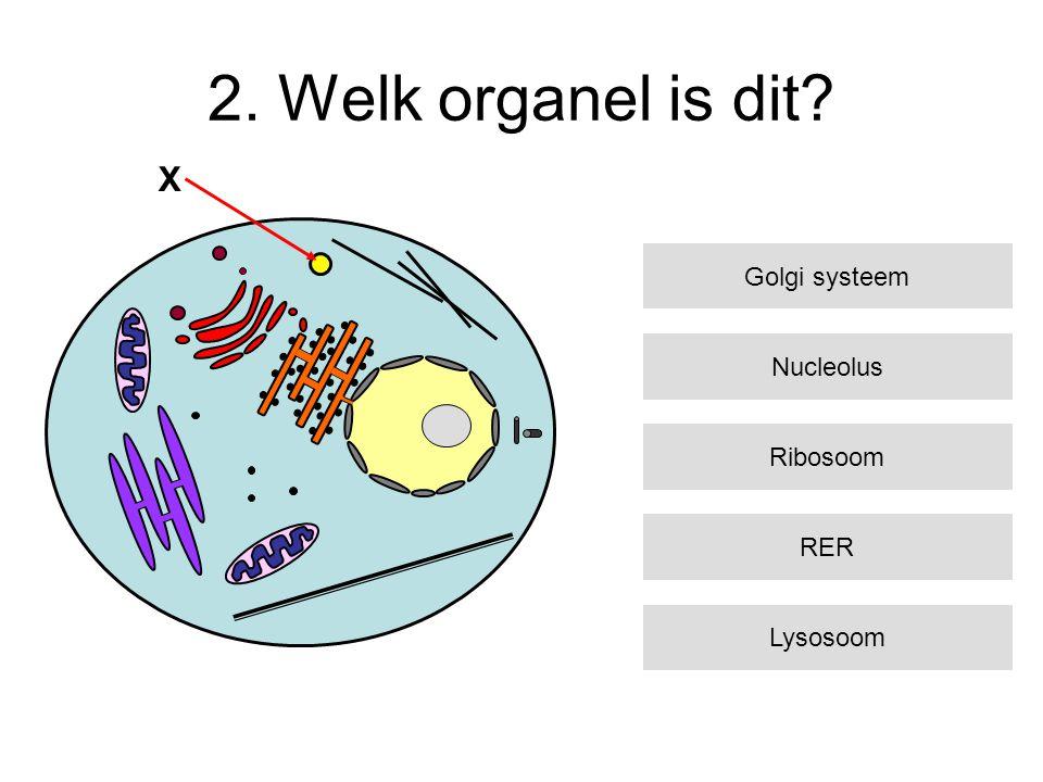 2. Welk organel is dit X Golgi systeem Nucleolus Ribosoom RER