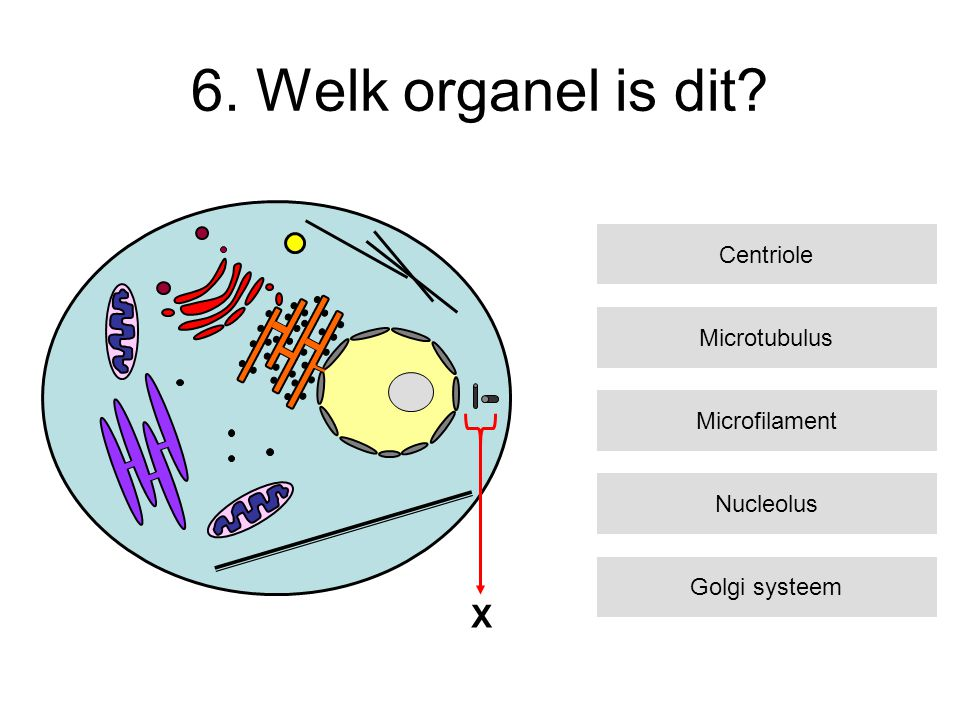 6. Welk organel is dit X Centriole Microtubulus Microfilament