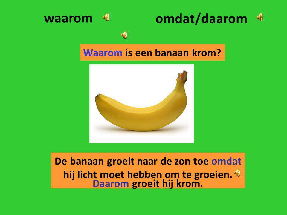 waarom omdat/daarom Waarom is een banaan krom