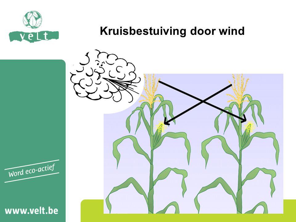 Kruisbestuiving door wind