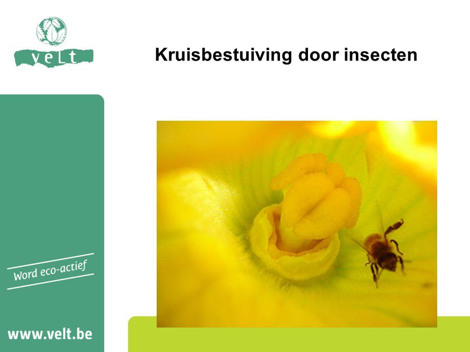 Kruisbestuiving door insecten