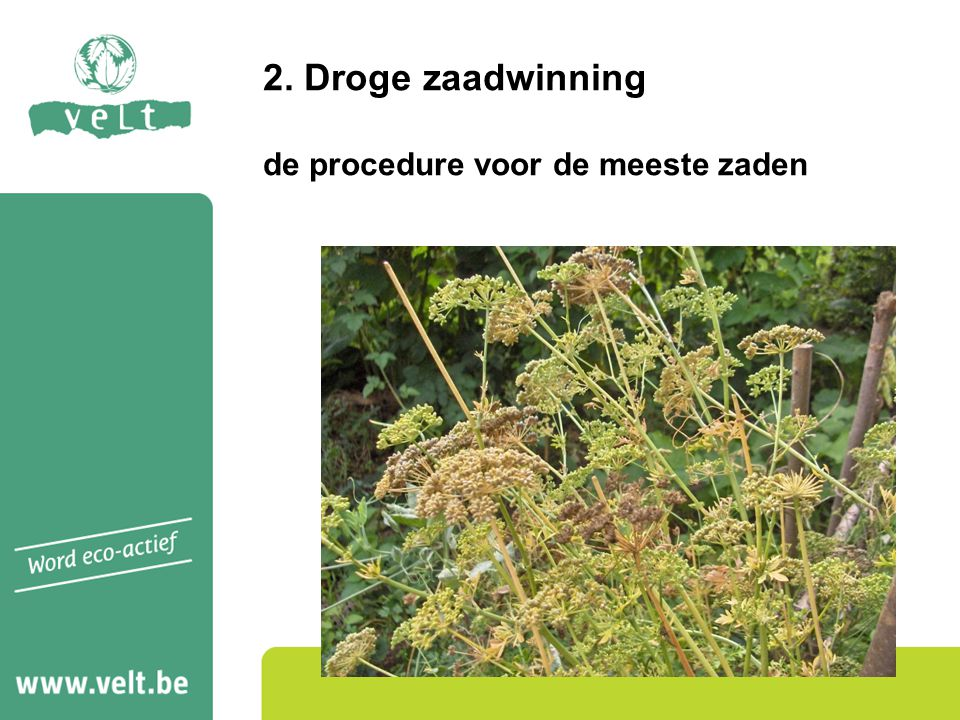 2. Droge zaadwinning de procedure voor de meeste zaden
