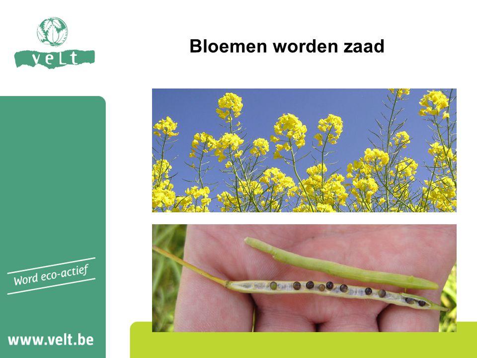 Studiedag Velt - 17 november 2012