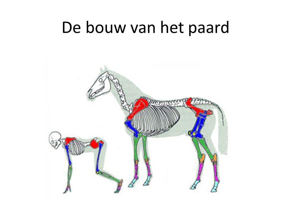 De bouw van het paard