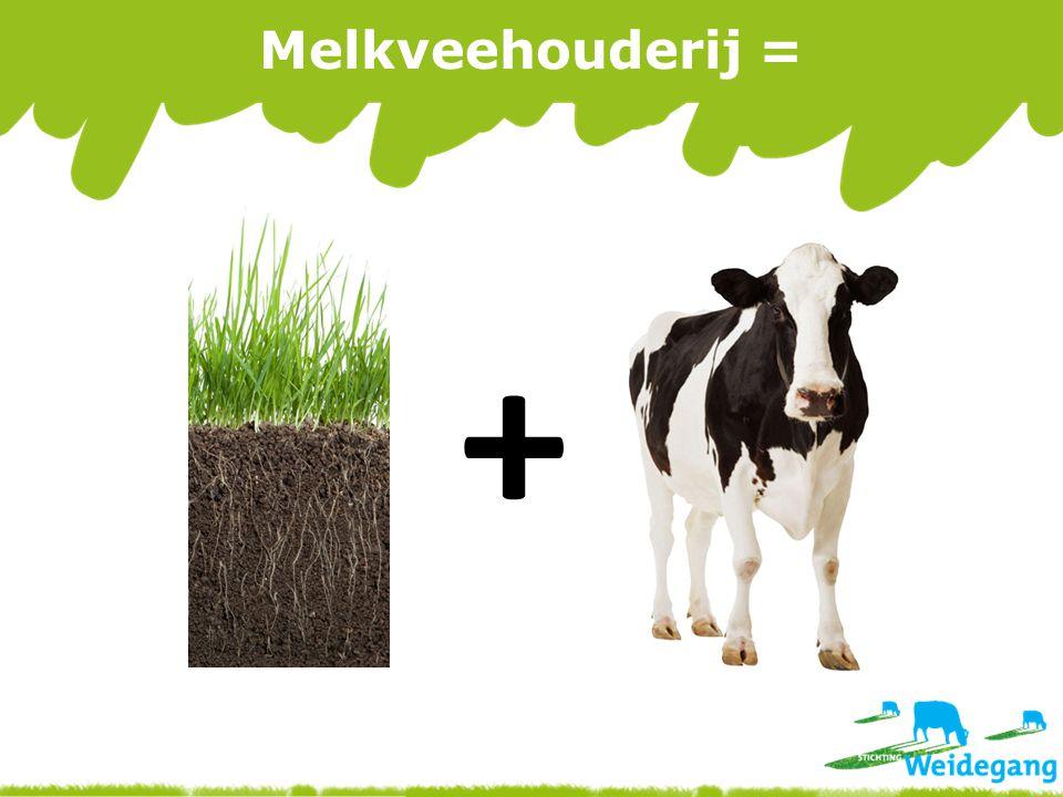 Melkveehouderij = +