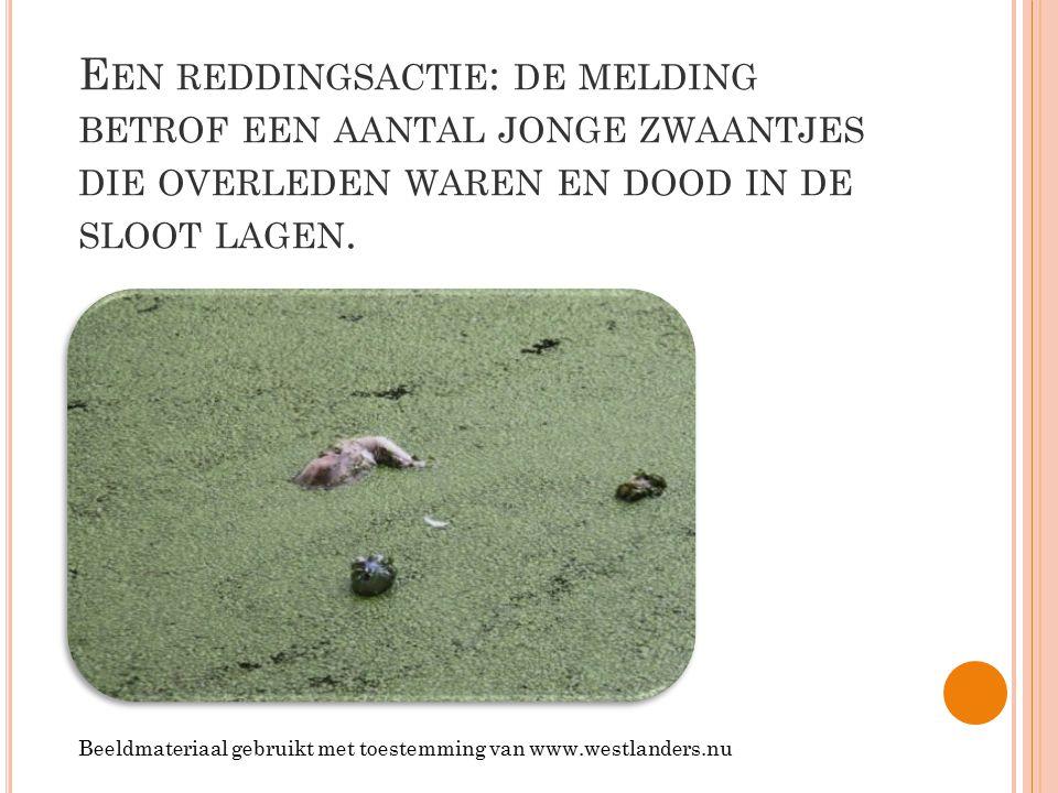 Een reddingsactie: de melding betrof een aantal jonge zwaantjes die overleden waren en dood in de sloot lagen.