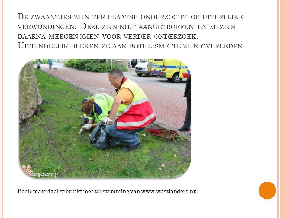 De zwaantjes zijn ter plaatse onderzocht op uiterlijke verwondingen