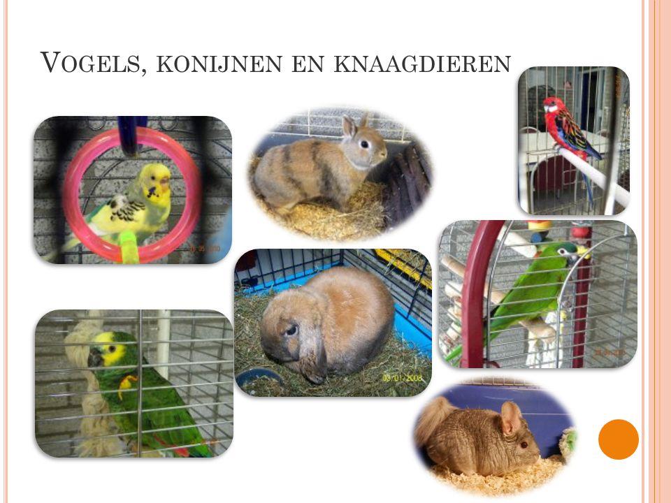 Vogels, konijnen en knaagdieren