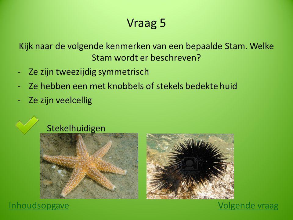 Vraag 5 Kijk naar de volgende kenmerken van een bepaalde Stam. Welke Stam wordt er beschreven Ze zijn tweezijdig symmetrisch.